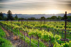 Sonnenuntergang im kalifornischen Wine County Sonoma
