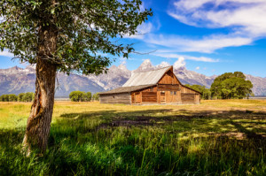 Scenic view of Grand Teton with old wooden farm and tree
